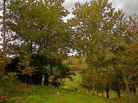 Salgueiral, Outono 2008