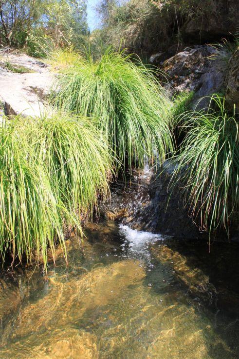 Lagoa das Mantas